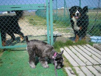 dog-run3