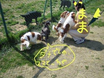dog-run4